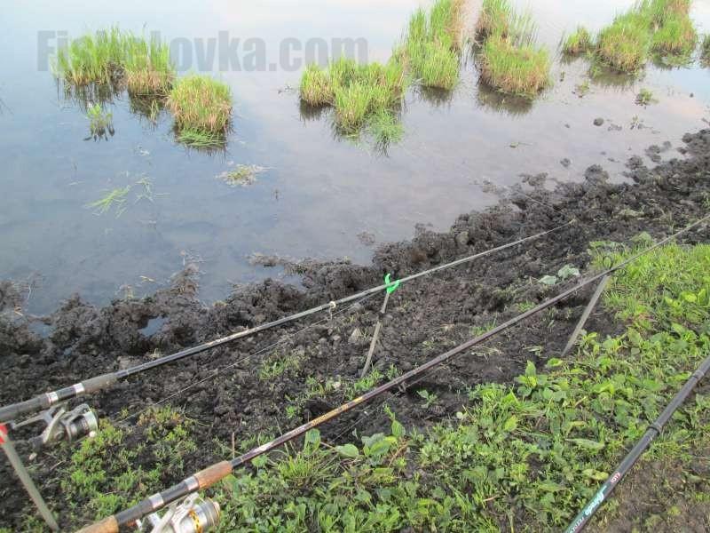 На стоячем водоеме фидеры ставят параллельно берегу.