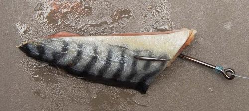 Кусок рыбы – одна из популярных наживок на сома.