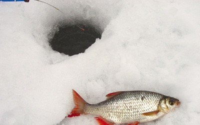 Зимняя ловля красавицы красноперки