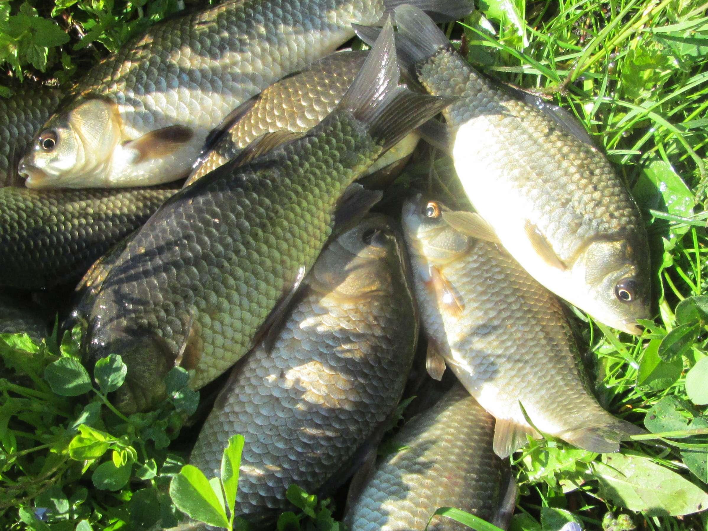 Осенняя рыбалка на карася поплавочной удочкой
