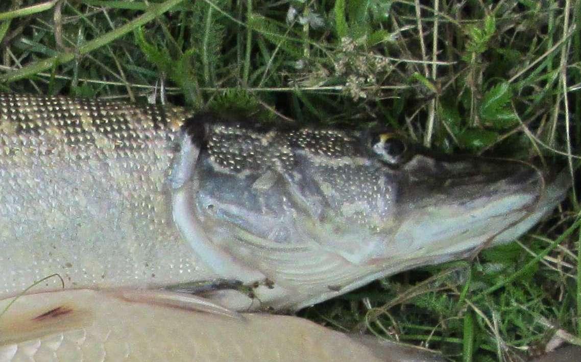 Снасти для ловли щуки на живца: их разновидности и монтажи