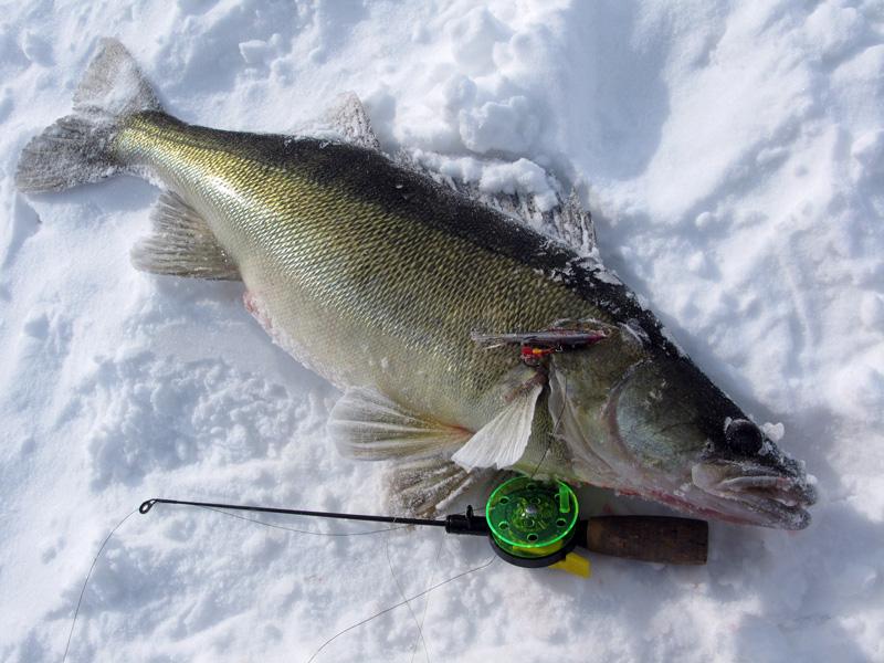 Комплектация зимней удочки на судака, поиск рыбы и техника ловли