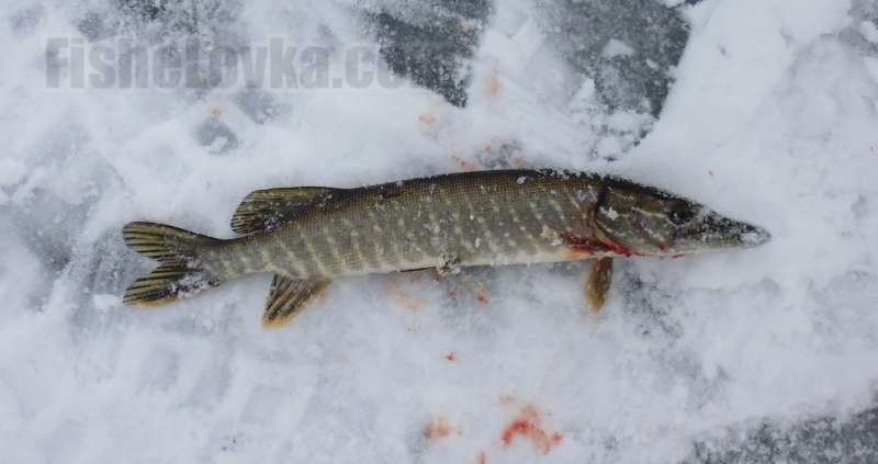Зимняя рыбалка на щуку