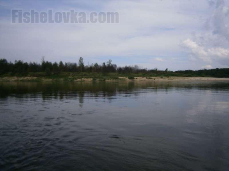 Сумерки на реке, Налимы выходят на охоту.