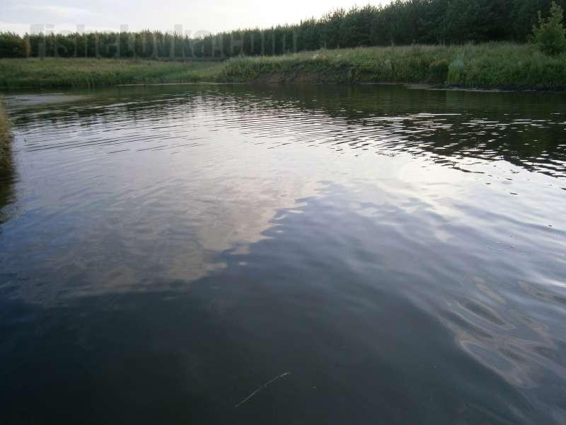 В спокойной воде уклейка клюет лучше.