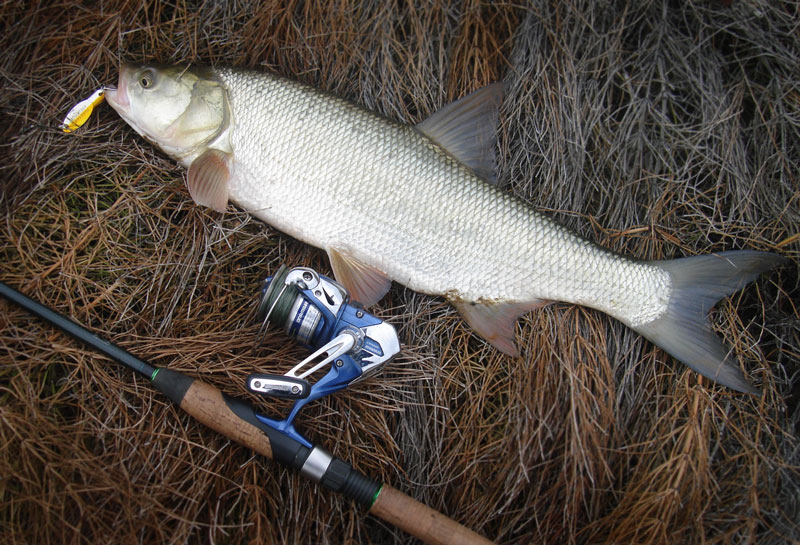 Виды блёсен на жереха, как ловить рыбу