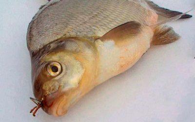 рыбалка на леща осенью удочкой