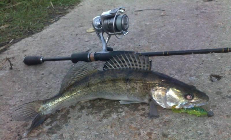 Спиннинг - самый распространенный вид рыбалки на судака.