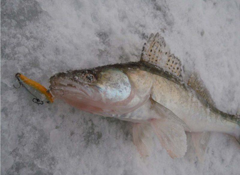 способы рыбалки в астрахани осенью