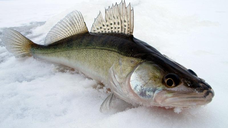 прикормки рыбалки своими руками леща