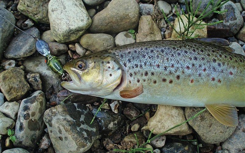 Как ловить форель на спиннинг: секреты рыбалки