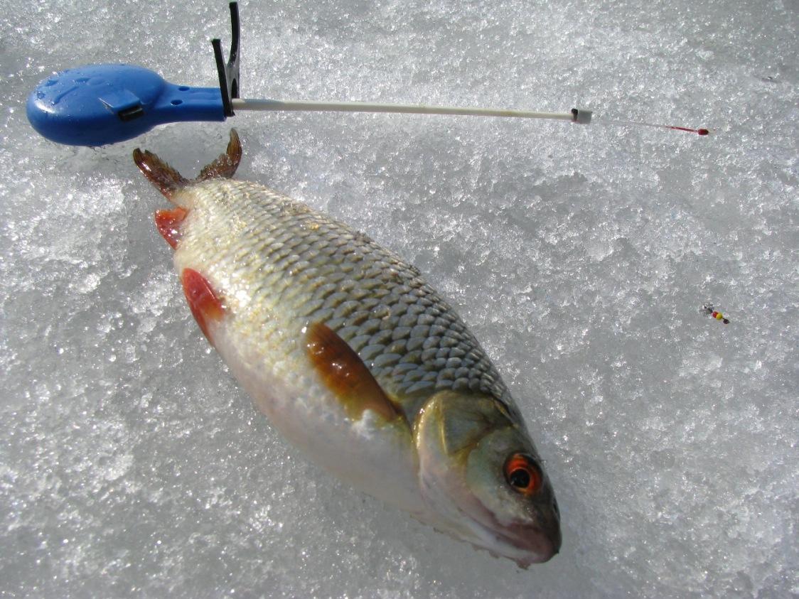 Зимняя ловля плотвы: основные характеристики лучших мормышек