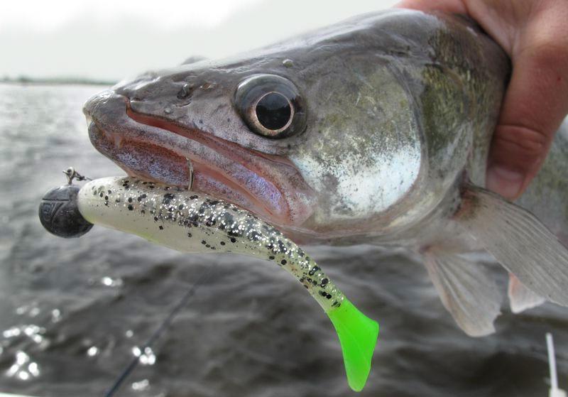 какая рыба клюёт в начале марта