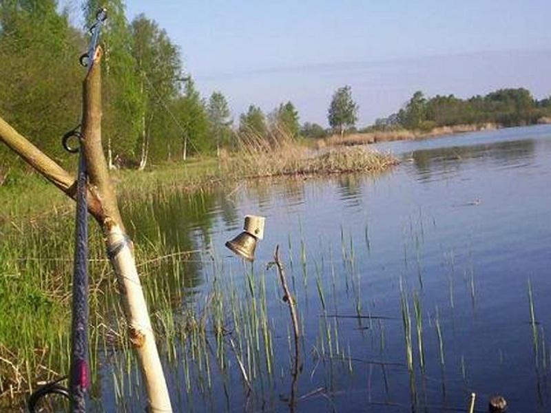 Особенности ловли разных видов рыб на классическую закидушку