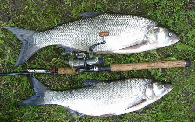 Большой рыбе -крепкую снасть!