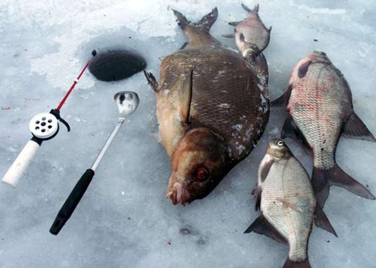 Ловля леща зимой.