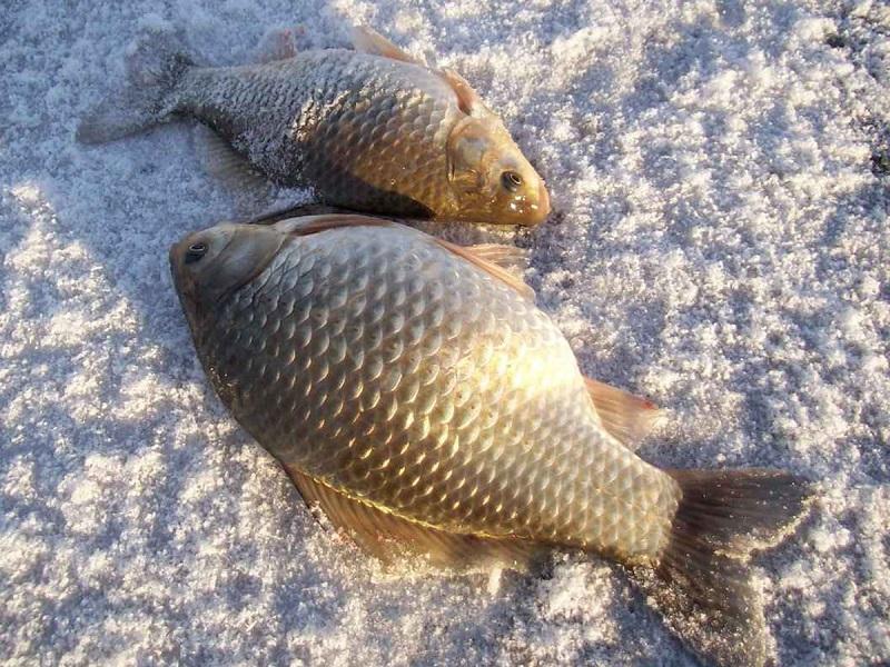 прикормка для рыбы фото