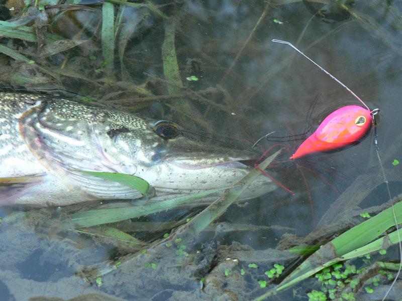 Приманки-глиссеры – ловля хищной рыбы на хорватское яйцо