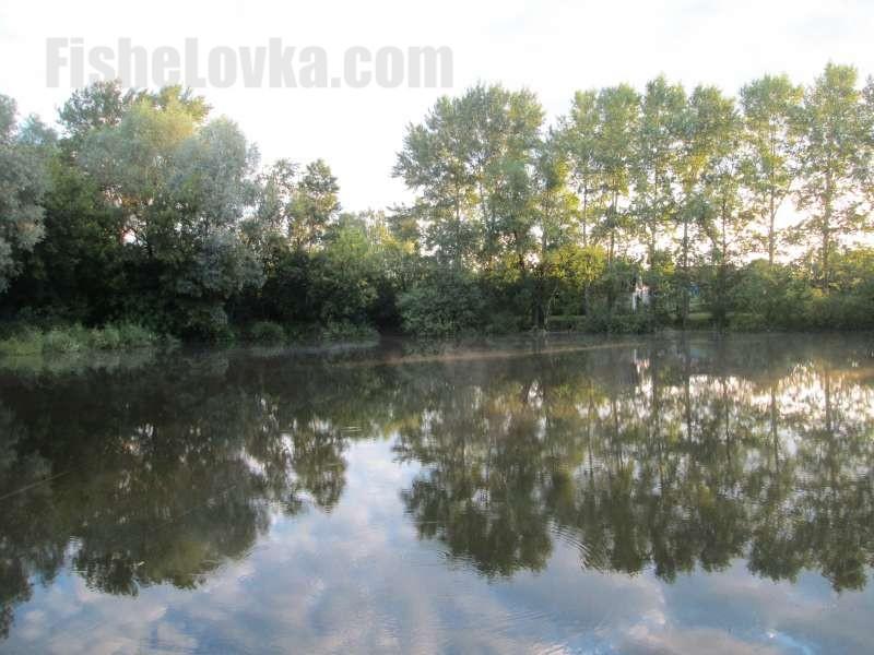 Плотва обитает и в небольших водоемах.