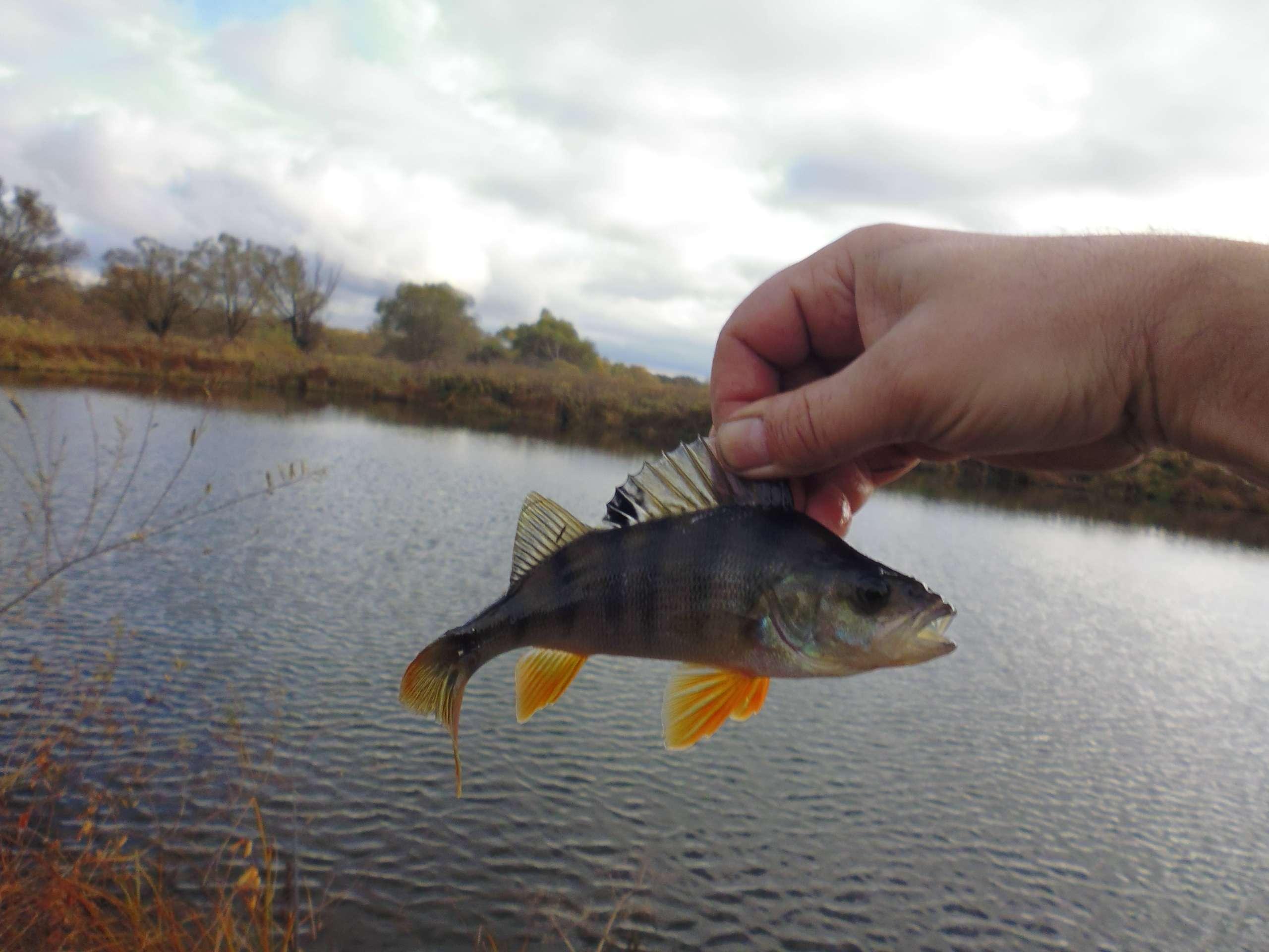 ловля окуней на озерах