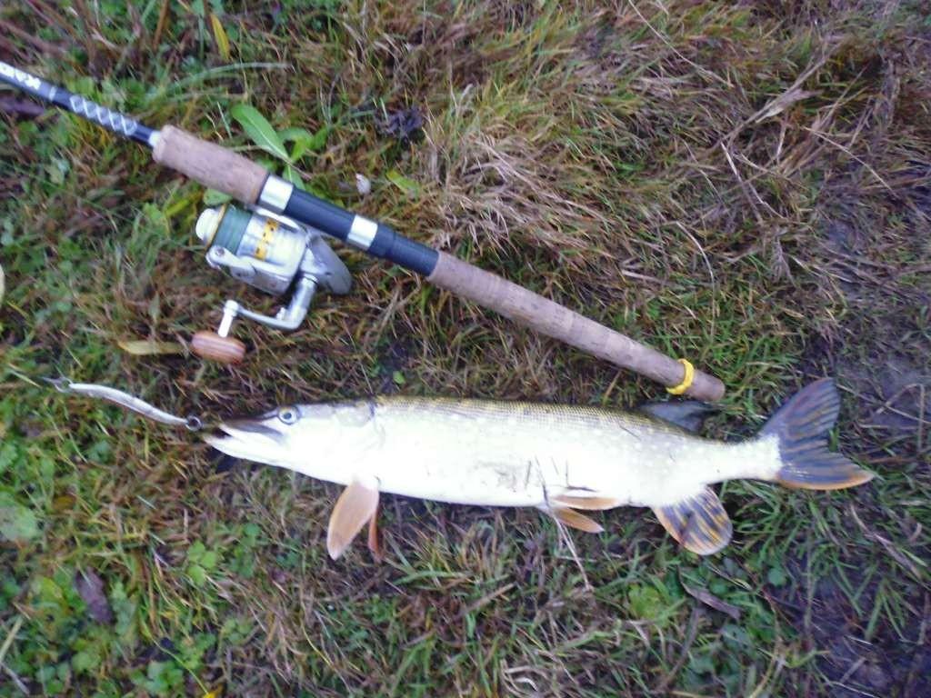 Ловля щуки на спиннинг весной с берега: когда и как ловить щуку весной