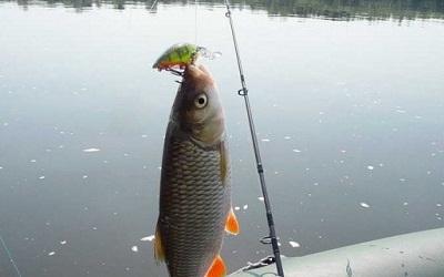 Техника и основные принципы осенней рыбалки на голавля