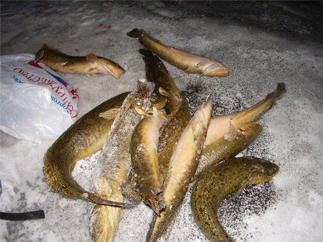 Правильный выбор места - залог успешной рыбалки.