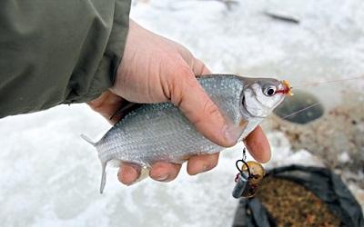 Берш – ловля на реке зимой со льда, Время рыбалки!