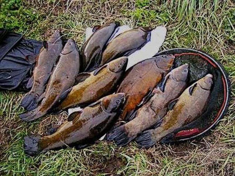 Рыбалка на линя поплавочной удочкой: сбор снасти и поиск перспективных мест