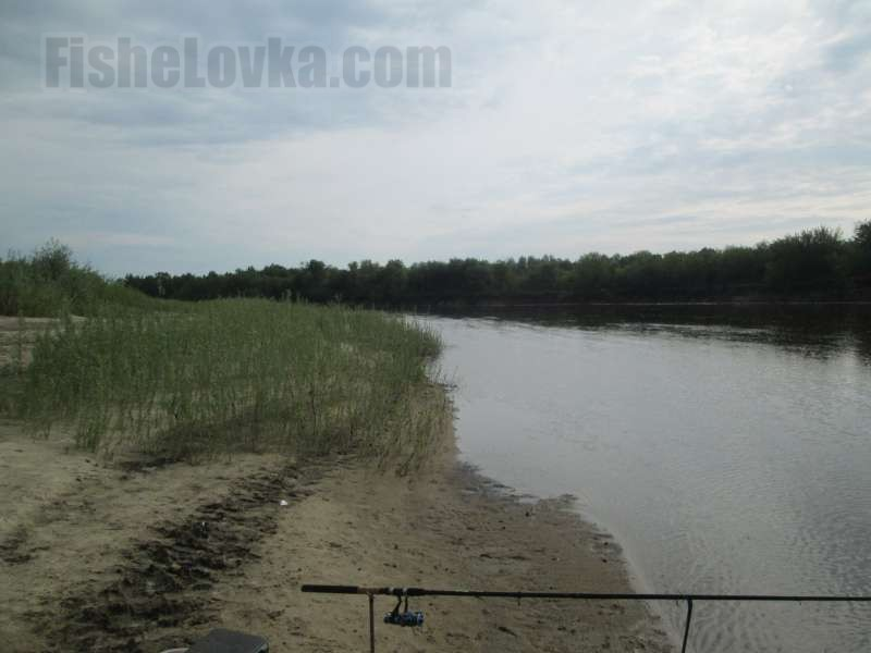 Поворот реки - перспективное место ловли.