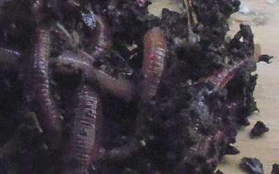 Способы насаживания червя на крючок