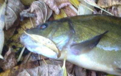 Осенняя рыбалка на линя