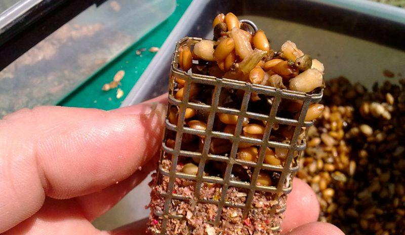 Фидерная прикормка с пшеницей.