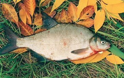 прикормка для речной рыбы в домашних условиях