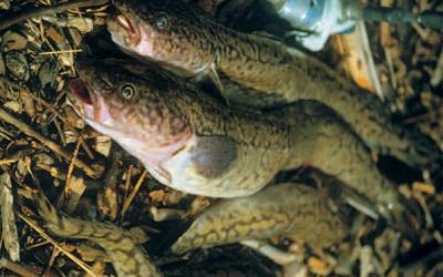 виды прикормок для рыбалки