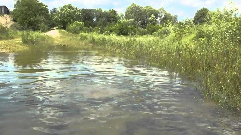 Во время нереста вода буквально кипит.