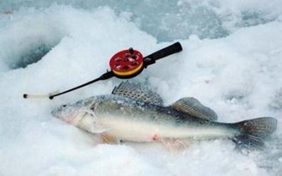 Зимняя рыбалка судака на мормышку