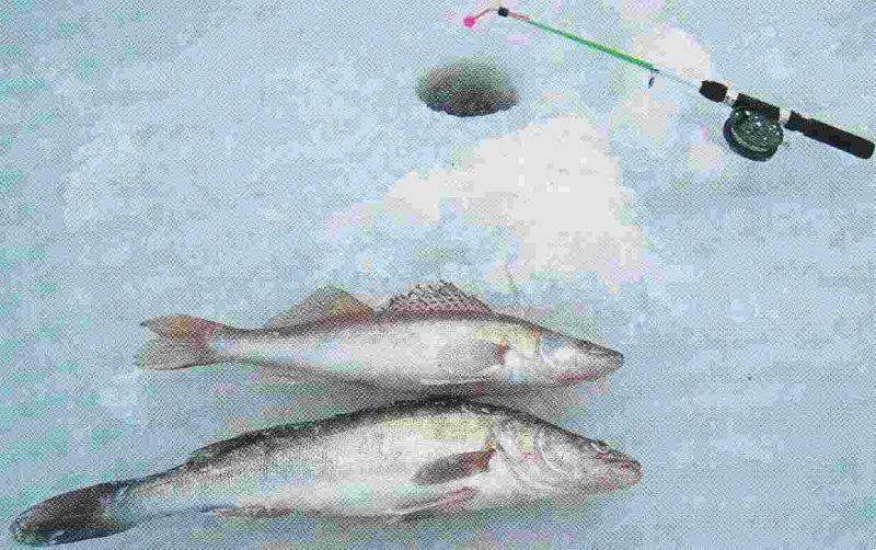 Для крупной рыбы нужна прочная снасть.