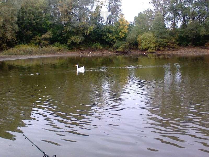 Простой деревенский пруд - одна из вотчин карпа.