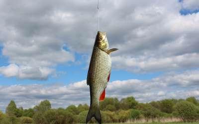 Рыбалка нахлыстом на голавля