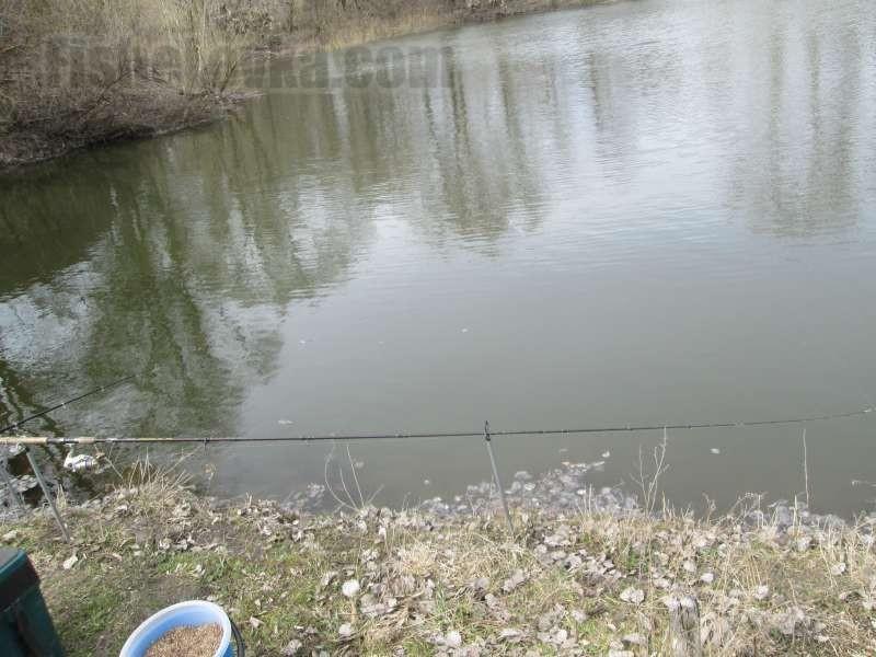 Типичный пруд с карасями.