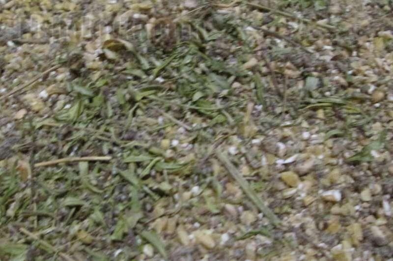 состав прикормки для леща на фидер весной
