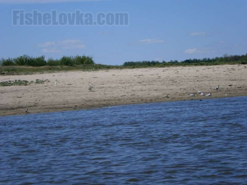 Песчаные пляжи - место рыбалки на чехонь.