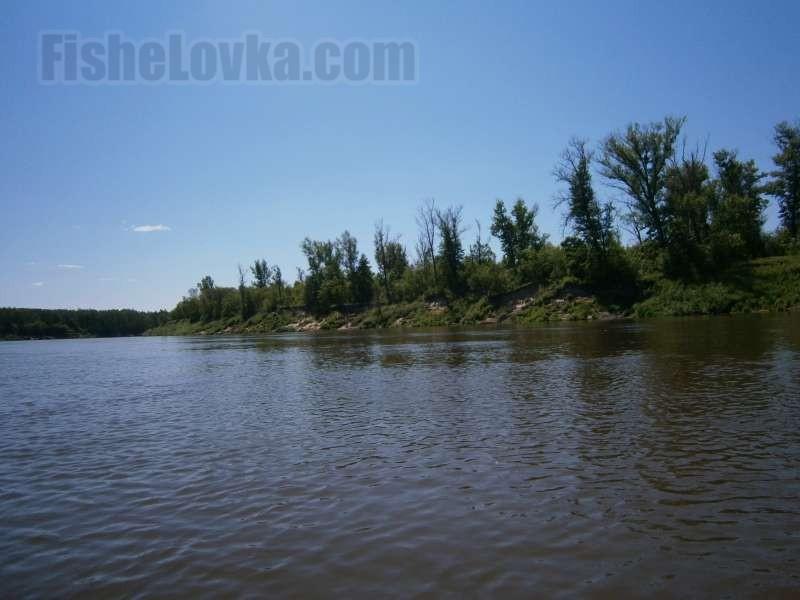 У поросшего деревьями берега.