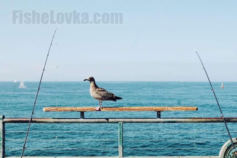 Ловля самодуром с лодки.