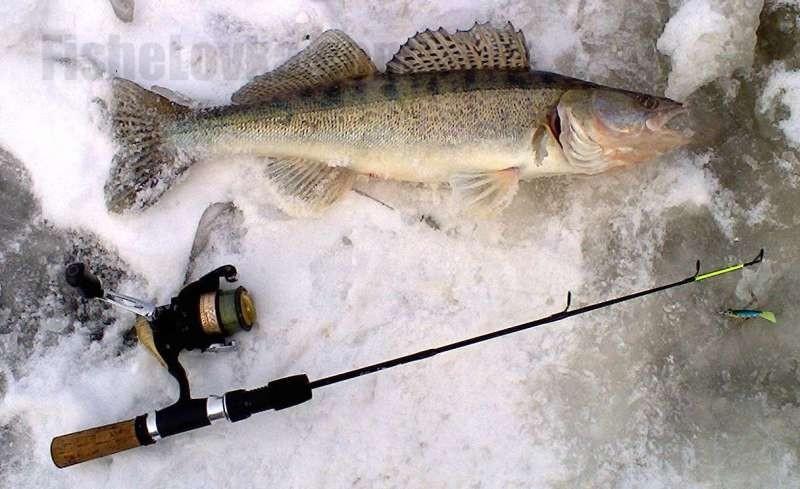 виды прикормки для рыбалки