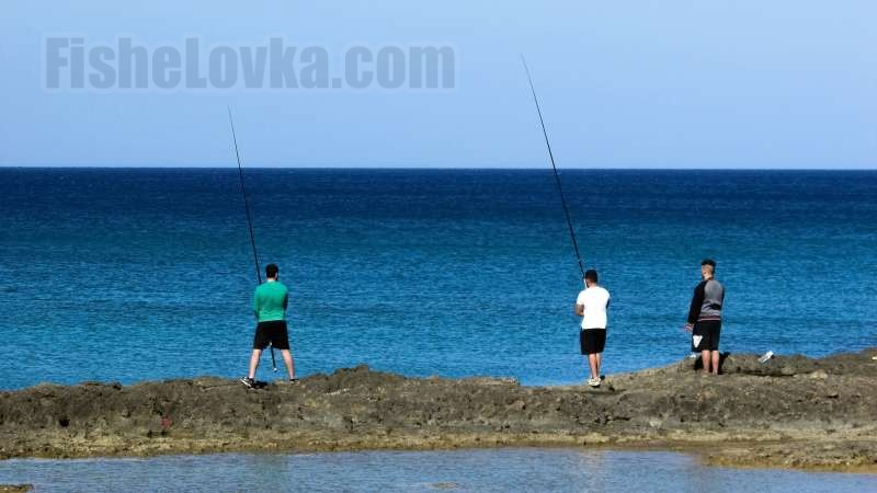 Рыба подошла близко к берегу.