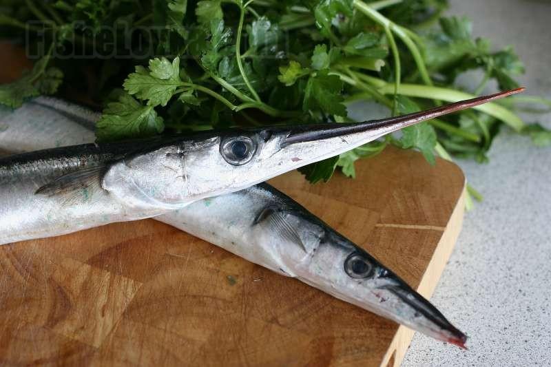 Сарган – интересные особенности о рыбе, которые следует знать каждому рыбаку