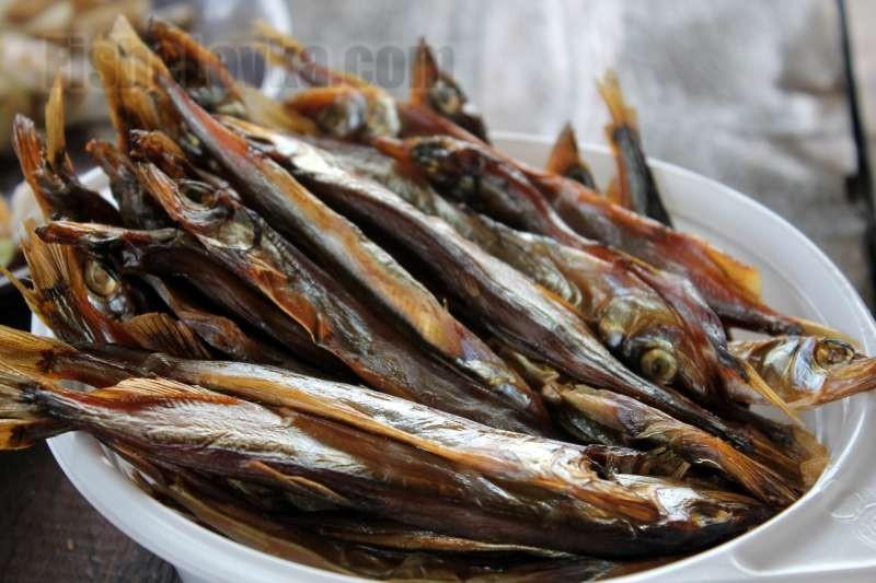 Биологическая характеристика рыбы корюшки и способы ее ловли