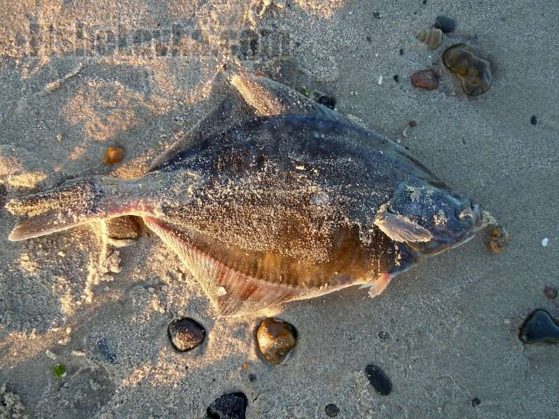 способы рыбалки с берега
